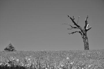 blackandwhite nature freetoedit