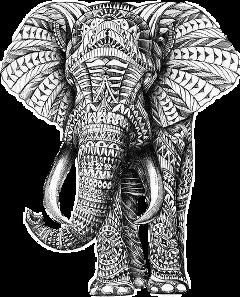 elephantstickers freetoedit