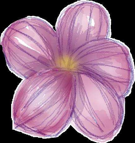 #flor #flower #pink #catarinazs