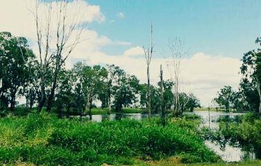 freetoedit queensland australia wetseason wetlands