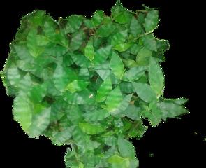 liriosbellos fromcostarica withpicsart purelife freetoedit