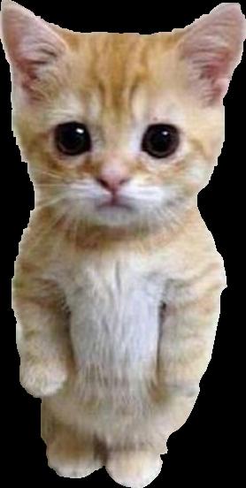Kitten #animal #kitten #cat #nature #summer #FreeToEdit