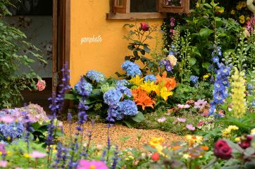 spring gardenflowers flowers