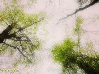 spring trees heven freshness green