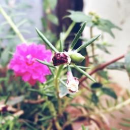 flowerbuds spring stark closeupshot pretty