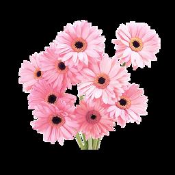 png edit freetoedit tumblr overlay flowers