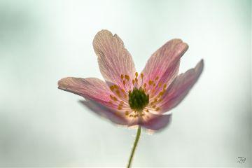 spring nature naturephotography flower emotions freetoedit