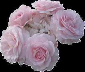 tumblr crown flower flowers