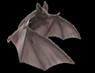 ftestickers bat batstickers freetoedit