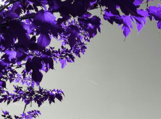 springtime leaves sky colorsplash purple