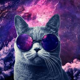 freetoedit cat galaxy