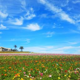 freetoedit dpcgarden dpcnatureisee myoriginalphoto flowerfields scenicview