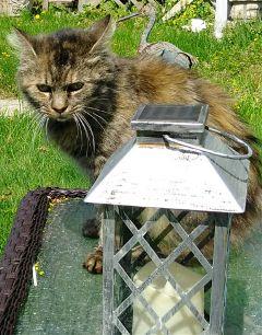 freetoedit cat photography spring feline