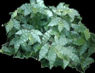 zacate byliriosbellos fromcostarica withpicsart purelife
