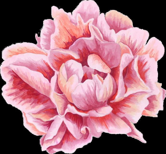 #flower #mb17
