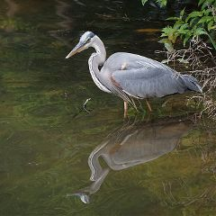freetoedit nature bird hero reflection