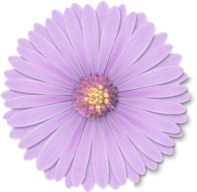 #purple #flower