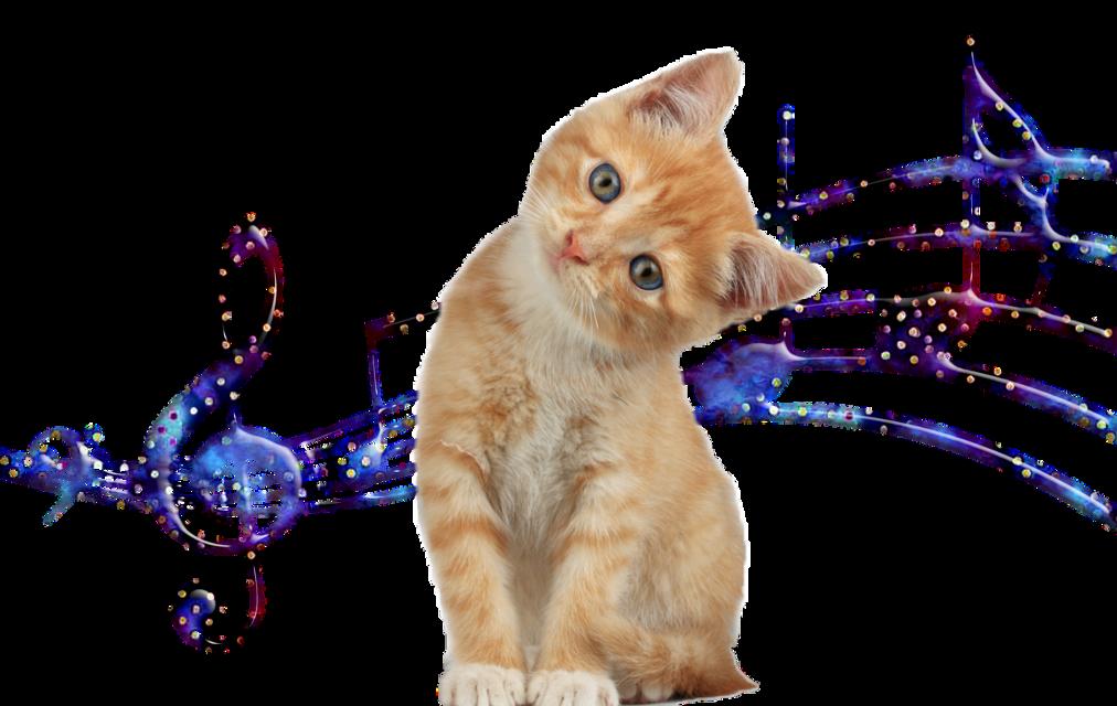 #pisicat