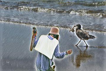 freetoedit photography ocean bird seaside