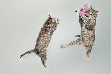 freetoedit cats cuteness pet animal