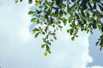 freetoedit tree green nature