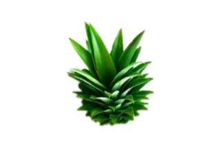 pinetree freetoedit