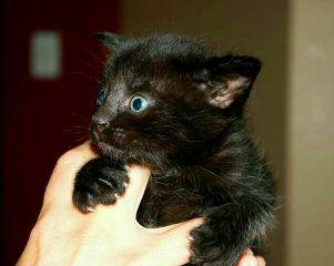freetoedit kitten kittenlove cats catslife