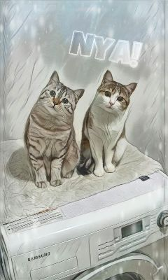 freetoedit catlover cats cute