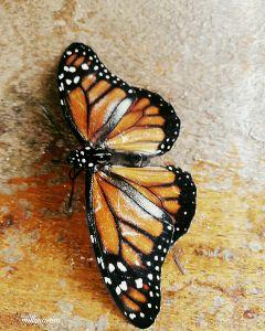 freetoedit buterfly brown cute