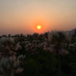 flower sunset naturebeauty freetoedit
