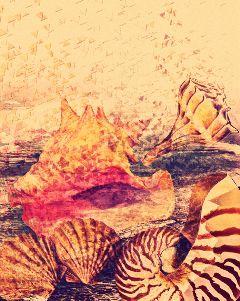freetoedit seashells seashell dispersioneffect magiceffect