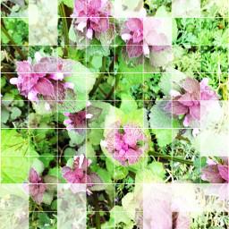 freetoedit wildplant wildflower offgrideffect