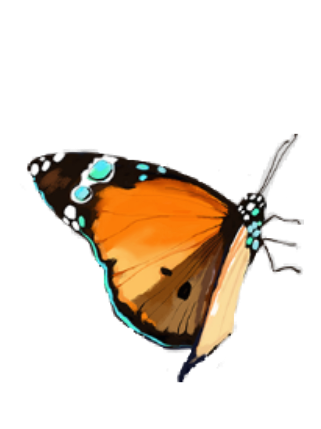 #butterfly #butterflysticker #premium #free