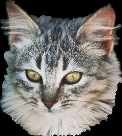 cat kitty kitten katze kätzchen