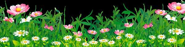 wildflowers grass freetoedit