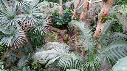 palmtrees biosphärepotsdam berlin pameeting7 samsungs5