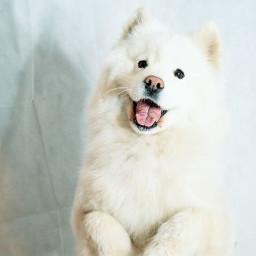 freetoedit dog doglove