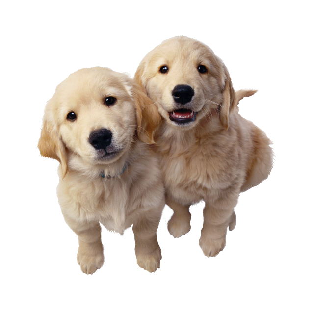 #perritos