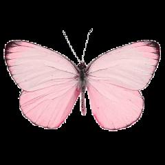 butterfly butterflywings wings pink love