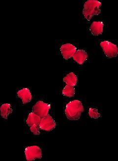 petals flower freetoedit