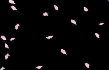 sakura petals flower floral falling