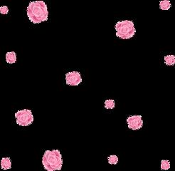 pinkroses flower floral rose pink