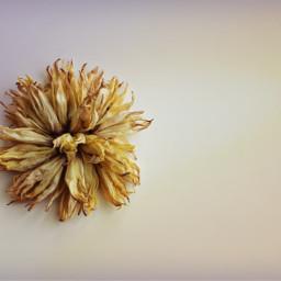 flower driedflowers minimalphotography keepitsimple myownphotography