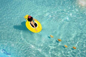 freetoedit myedit composition swim ducks