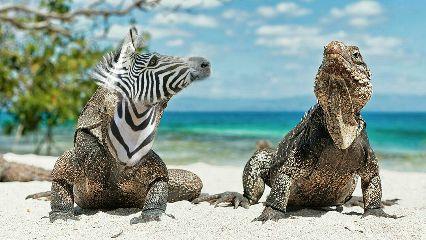wapanimalhybrid beach nature petsandanimals dragon
