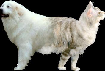 freetoedit catdog cat dog