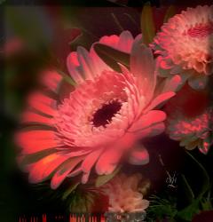 effects flower red @csefi