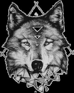 wolf teen teenwolf kurt freetoedit
