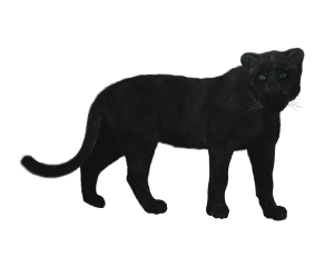 animalstickers panther blackpanther freetoedit