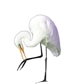 freetoedit bird crane